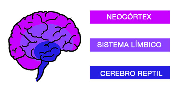 Los 3 cerebros en neuromarketing-Odellera.com
